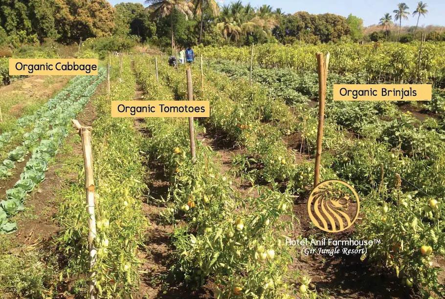 anil-farmhouse-organic-farming