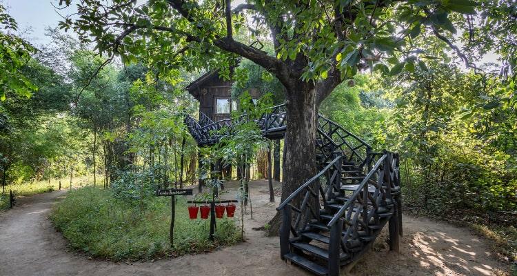 tree-house1