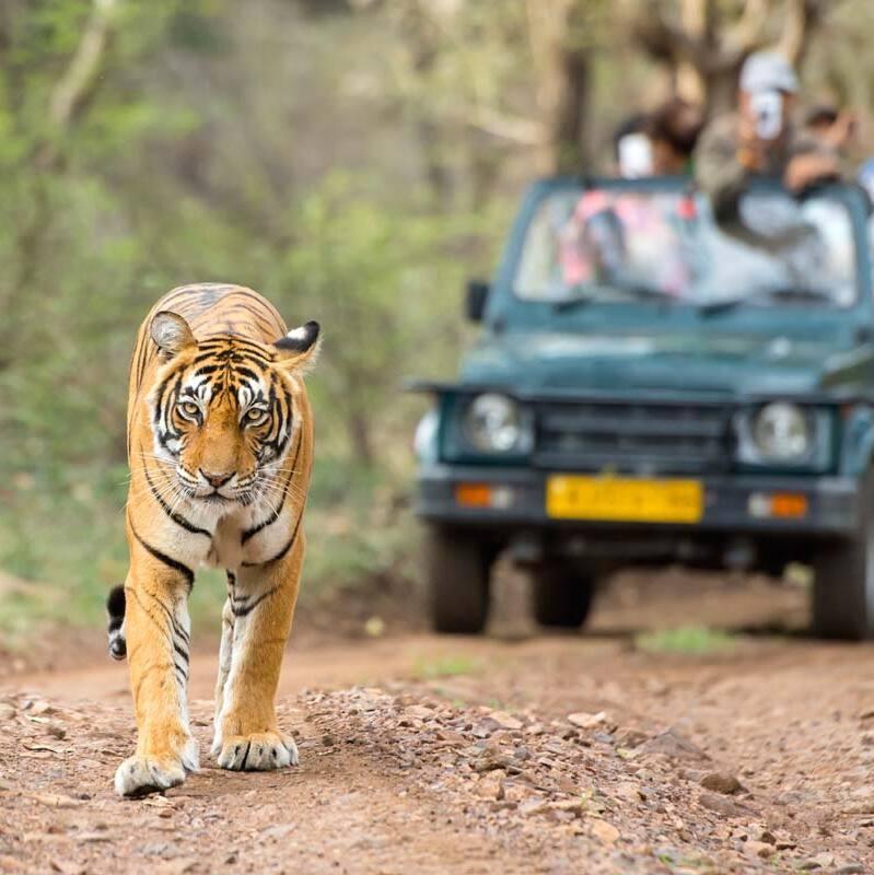 ranthambore-tiger-reserve