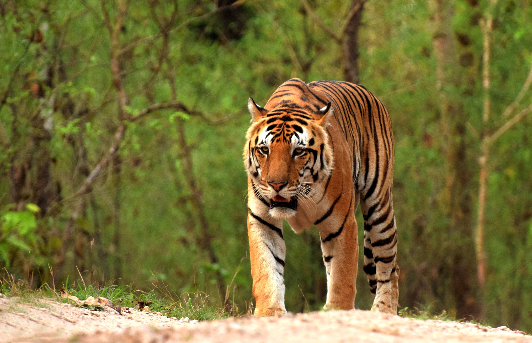 madhya-pradesh-has-some-of-the-best-national-parks-for-safari-lovers