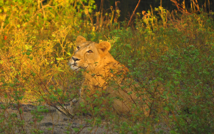 How Do I Get To Gir National Park