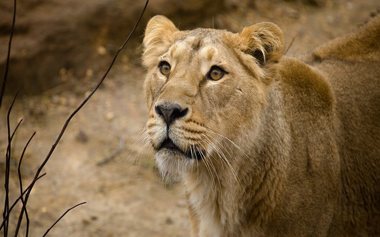 How to Reach Gir National Park?