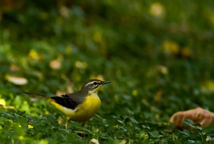 the-incredibly-fascinating-things-you-must-try-at-mudumalai-national-park