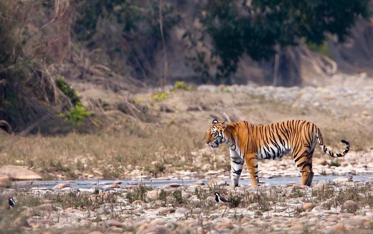 Tiger Safari in kanha Tiger Reserve