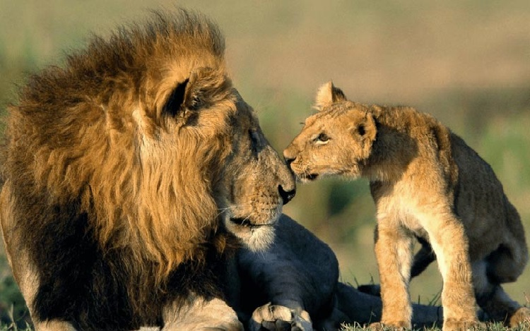 What Is Gir National Park Famous For