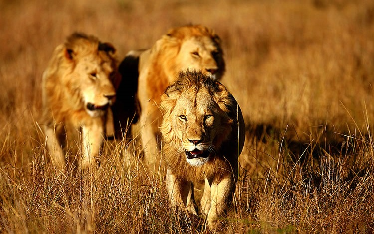 When Is Gir National Park Closed